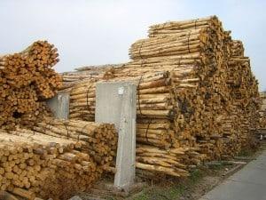 Kastanje palen houthandel