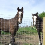 Two horses beind Tornado Premium Horse Fence